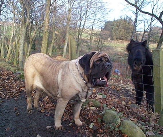 Zorba Dog Pictures
